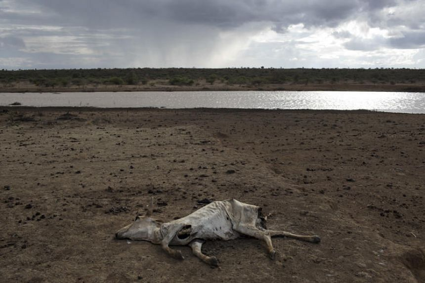 A dead cow on ranch land in Laikipia County, in central Kenya, the looming crisis facing much of Africa in the fight over the diminishing amount of arable land.