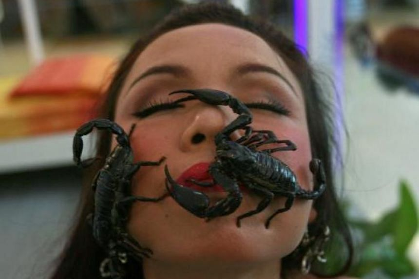 Scorpions crawl on the face of Thailand's 'Scorpion Queen' Kanchana Kaetkaew at the Ripley's Believe It or Not museum in Pattaya on Jan 24, 2009.