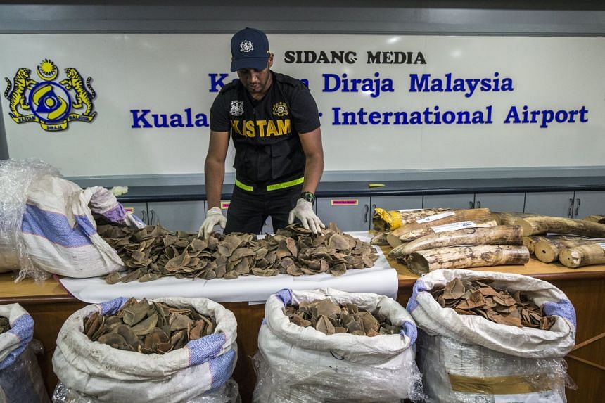 Over three hundred kilograms of Pangolin scales from the Republic of Congo via Ethiopian Airlines and 75.74 kg of elephant tusks via Etihad Airways from Lagos-Abu Dhabi-Kuala Lumpur were seized at KLIA airport. PHOTO: EPA