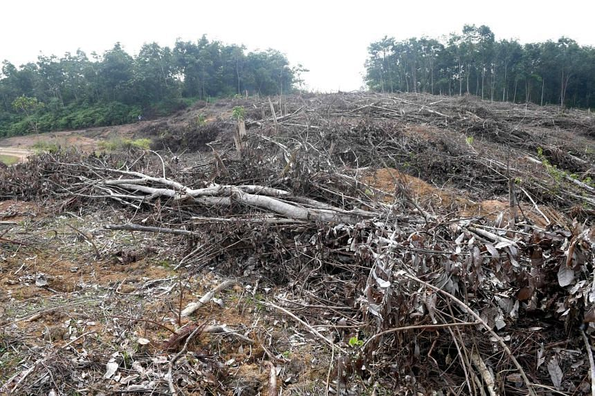 This handout photo, taken on May 19, shows a section of a forest that was cleared illegally to plant oil palm trees in Jambi, south Sumatra.