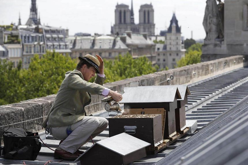 French beekeeper Audric de Campeau checks beehives set on the roof of the Monnaie de Paris in Paris on June 16, 2017.