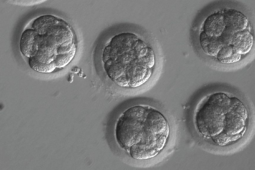 Embryos after gene editing and a few rounds of cell division.
