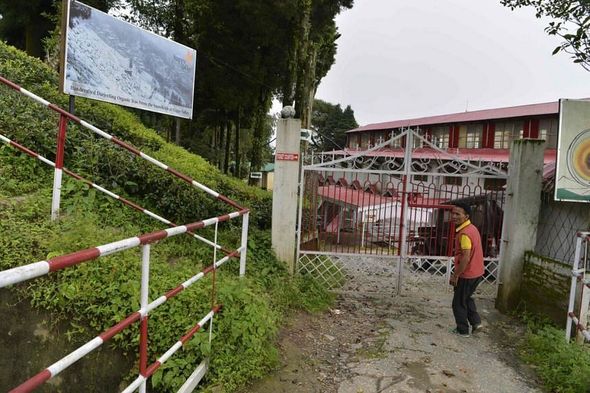Indian caretaker walking near the main entrance of the high altitude Happy Valley Tea garden factory during an indefinite strike called by the Gorkha Janmukti Morcha (GJM), in Darjeeling.