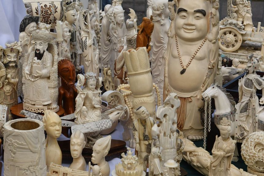 Ivory on display before being crushed in Central Park.