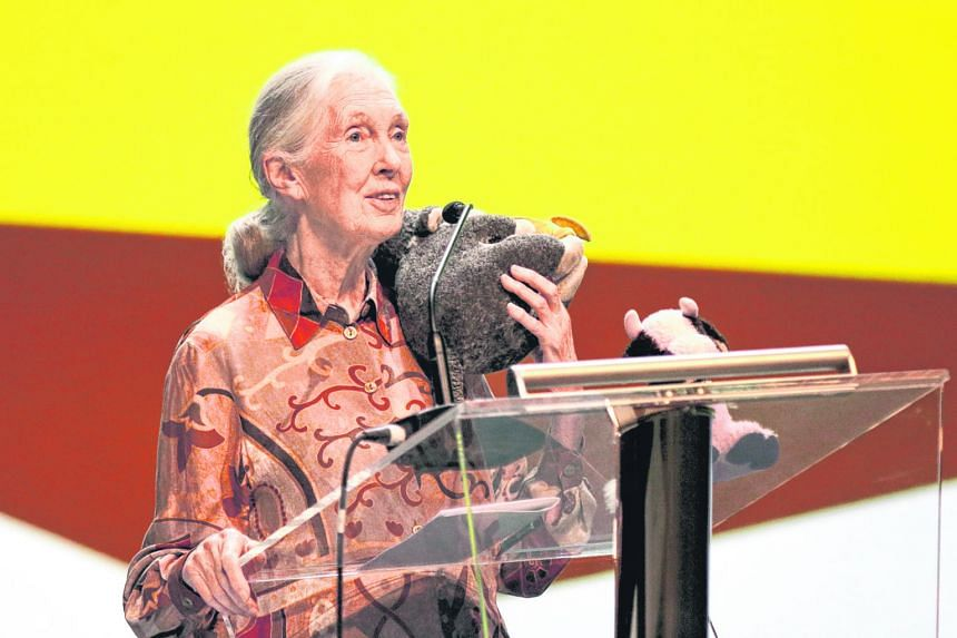 Dr Jane Goodall, with a stuffed chimpanzee on her shoulder, making her presentation at an event to mark the 10th anniversary of the Jane Goodall Institute (Singapore) yesterday.