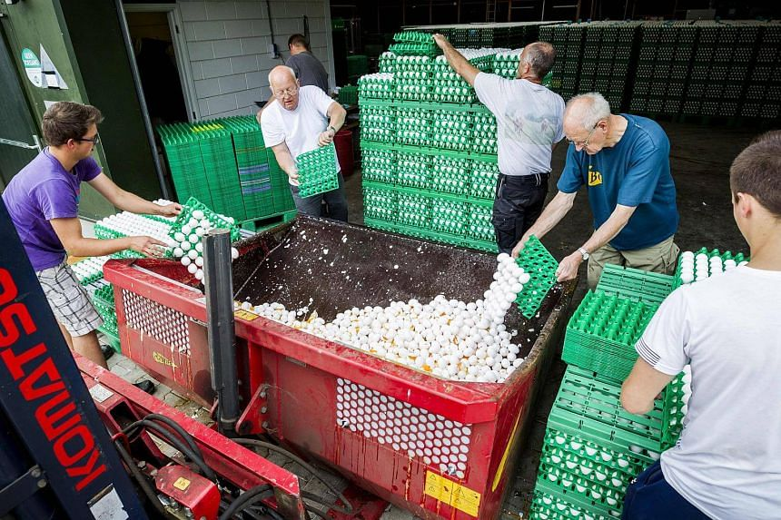 Farmers dispose of eggs at a poultry farm in Onstwedde, Netherlands, on Aug 3, 2017.