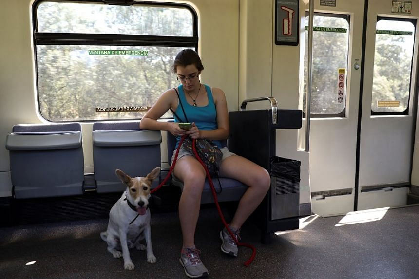 A woman checks her mobile phone beside her dog as they travel on a city train in Madrid, Spain, on July 24, 2017.
