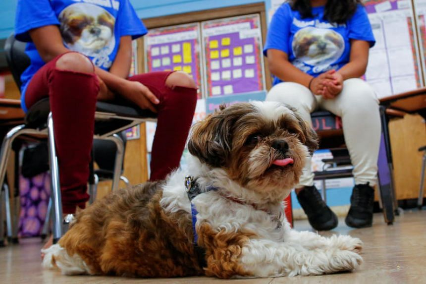 """The dog """"Petey"""" share a moment with children at MS 88 middle school in the neighborhood of Brooklyn in New York, on Aug 10, 2017."""