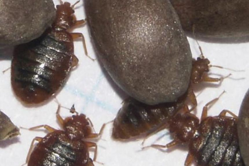 Beware Of Bed Bugs 7 Things To Know About The Blood Sucking