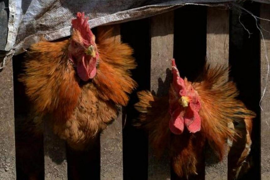 Many strains of flu viruses infect only birds, but the H7N9 strain has led to human cases, including deaths, in China.