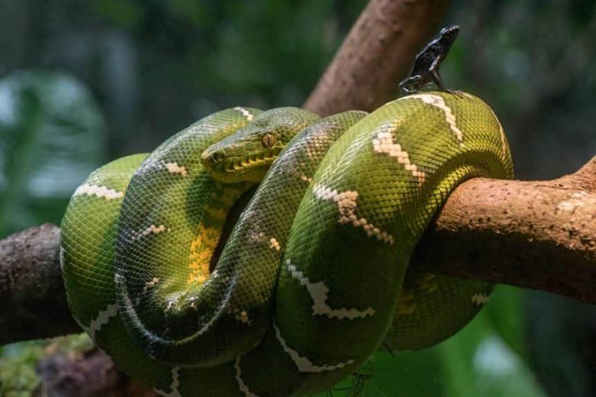 RepTopia houses over 60 of the world's most threatened reptiles.