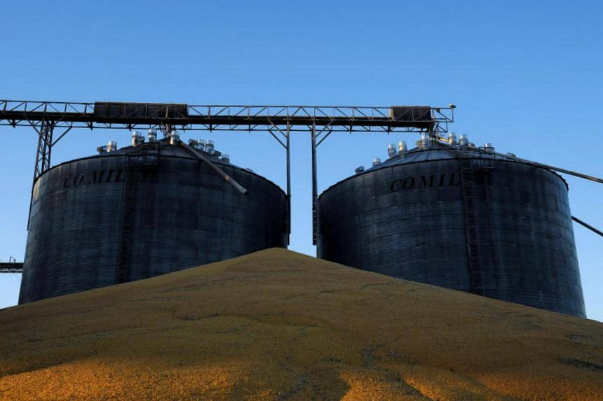 A general view shows second corn (winter corn) stored outside of the silos that are full of corn, near Sorriso in the Mato Grosso state, Brazil on July 26, 2017.