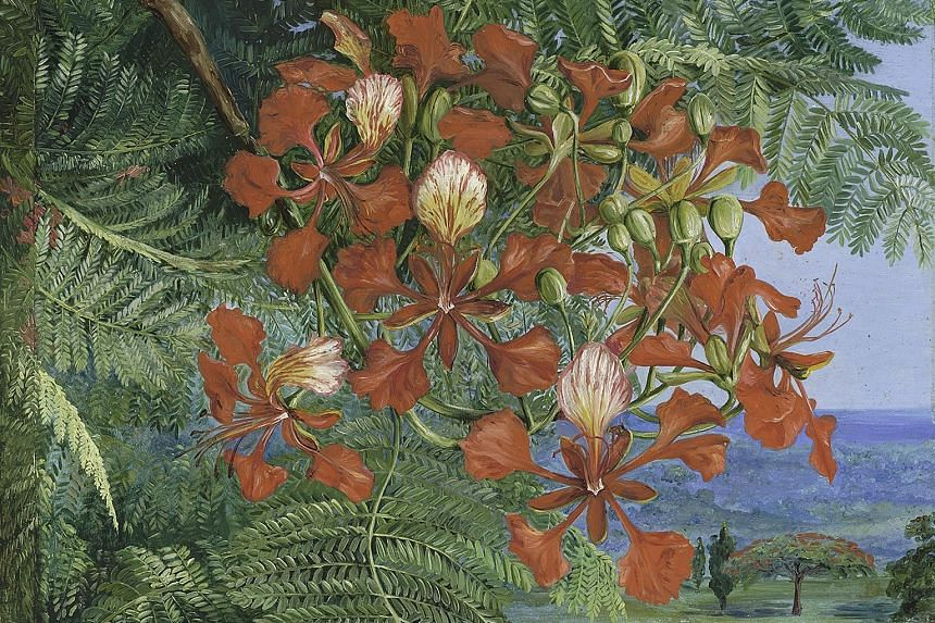Reproductions of botanical artist Marianne North's Lane Near Singapore (above) and Foliage And Flowers Of A Madagascar Tree At Singapore (below) are among the pieces featured.