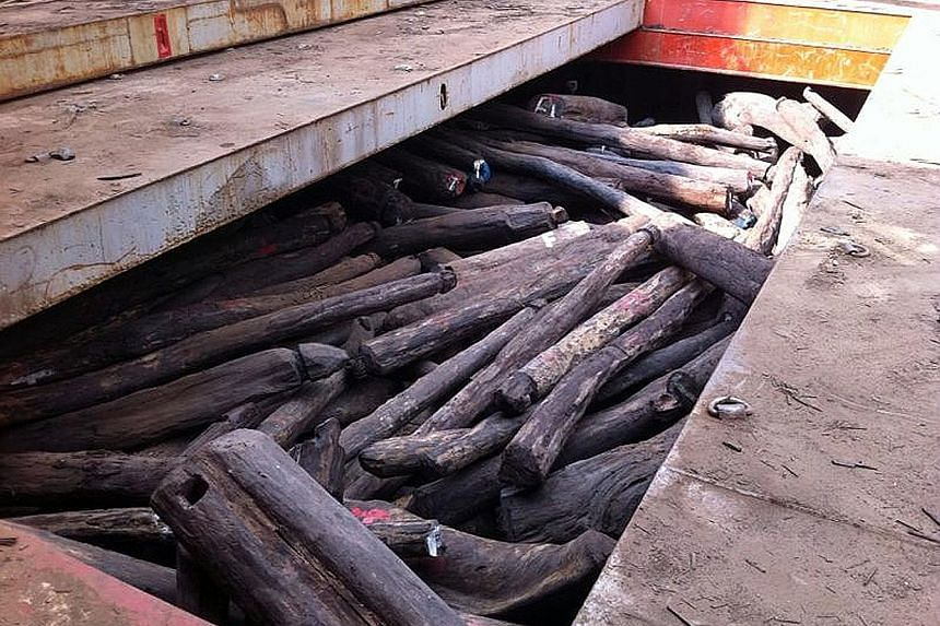 Rosewood logs seized in March 2014 that were worth US$50 million (S$68 million). They were imported by Singaporean businessman Wong Wee Keong and his firm without a permit from AVA.