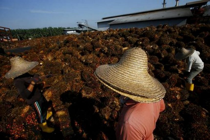 A worker collecting palm oil fruit inside a palm oil factory in Sepang, outside Kuala Lumpur in this June 18, 2014 file photo.