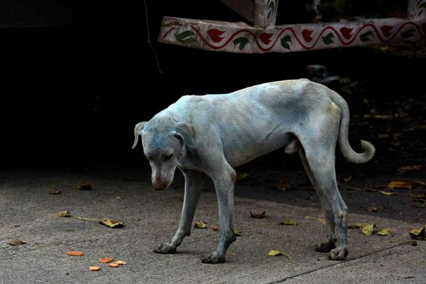 A stray dog with a light blue hue on a street near the Kasadi River in the Taloja industrial zone in Mumbai on Aug 17, 2017.