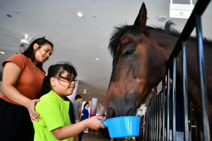 Nur Aleesya Binte Abdullah, 8, from Celebral Palsy Alliance Singapore with her aunt, feeding Shamus, a 20 years old male therapy pony on July 29, 2017.