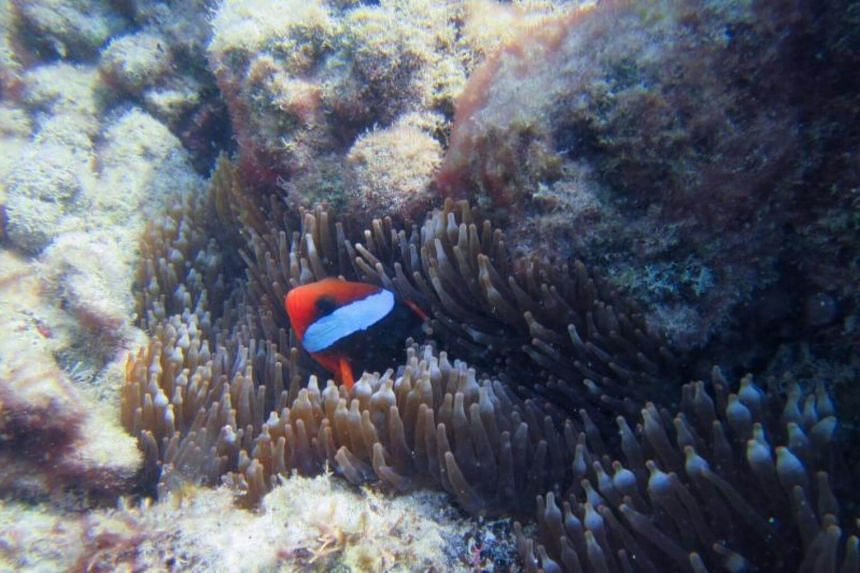 Diving enthusiast Deborah Yap said she cannot wait to spend her time in a place where she can easily access dive spots and places like the Great Barrier Reef.