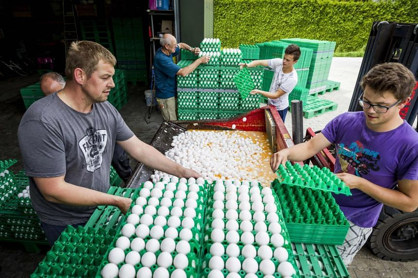 Farmers throw eggs at a poultry farm in Onstwedde after the Dutch Food and Welfare Authority  highlighted the contamination of eggs by fipronil on Aug 3, 2017.