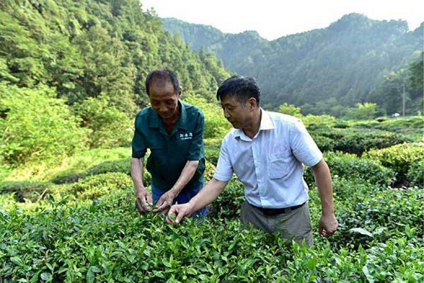 Mr Fang Guoqiang (right), president of Xin'anyuan Organic Tea Development, with a grower.