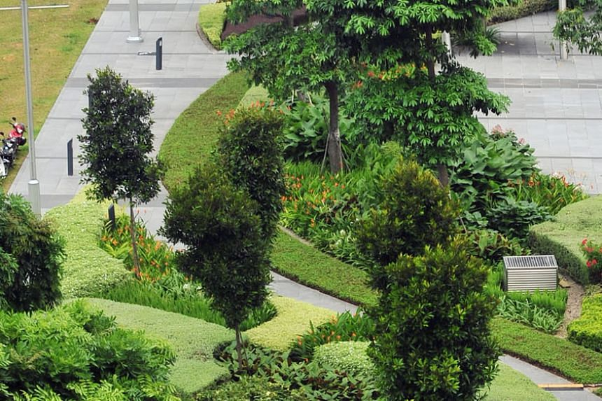 Flowering shrubs and shade trees line the Marina Bay Waterfront Promenade. The writer says well-designed walkways create a better walking experience, which will encourage people to increase their physical activities.
