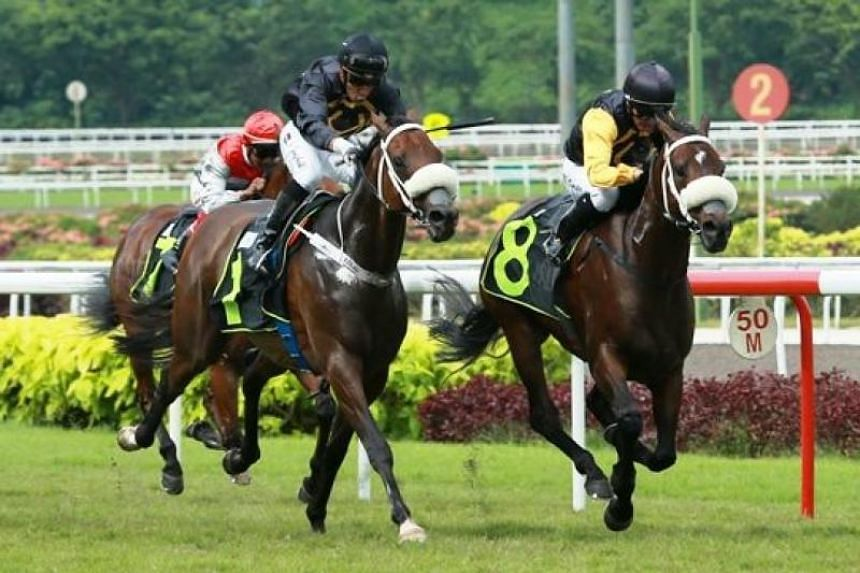 The Singapore Turf Club will introduce two new international races over 1,200m and 1,600m, with prize money of $1.35 million and $3 million respectively.