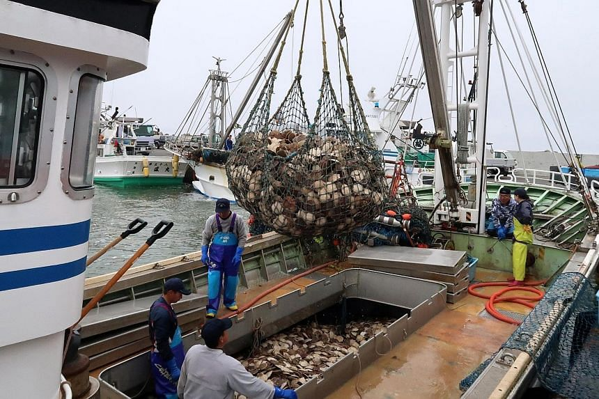 A haul of scallops at a port in Sarufutsu village, Japan. The village boasts some of the highest average incomes of any town in Japan, thanks to the earnings of some of the fishermen. By value, scallops are the biggest international export from Hokka