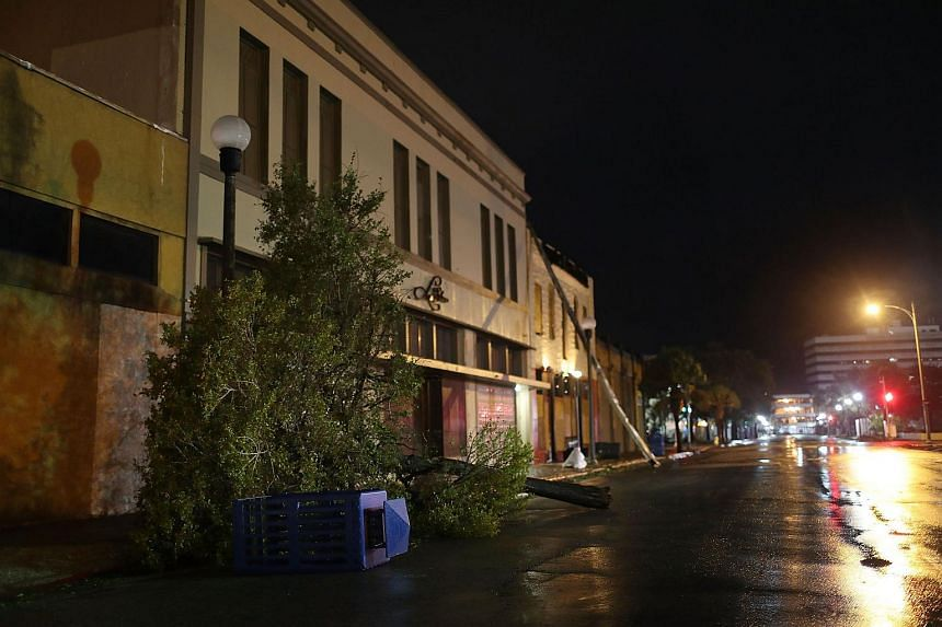 A tree is seen knocked over after the passing of Hurricane Harvey in Corpus Christi, on Aug 26, 2017.
