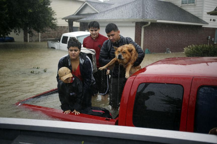 Residents with a dog stand in the back of a truck while waiting to be rescued from rising floodwaters in Spring, Texas, on Aug. 28 2017.
