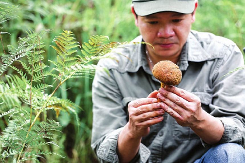 Chef Otto Goh from the Kerry Hotel Pudong selects wild mushrooms in Yunnan province.