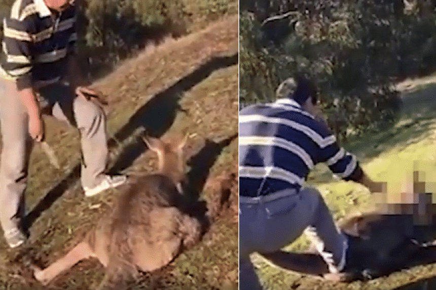 The 43-year-old man was filmed slashing repeatedly at the kangaroo's neck despite its cries.