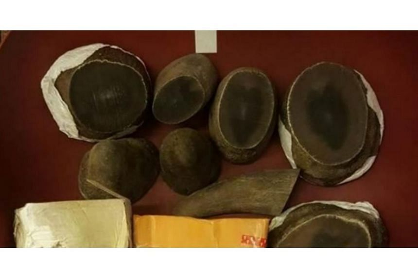 Illegal rhino horns detected and seixed on Aug 31, 2017.
