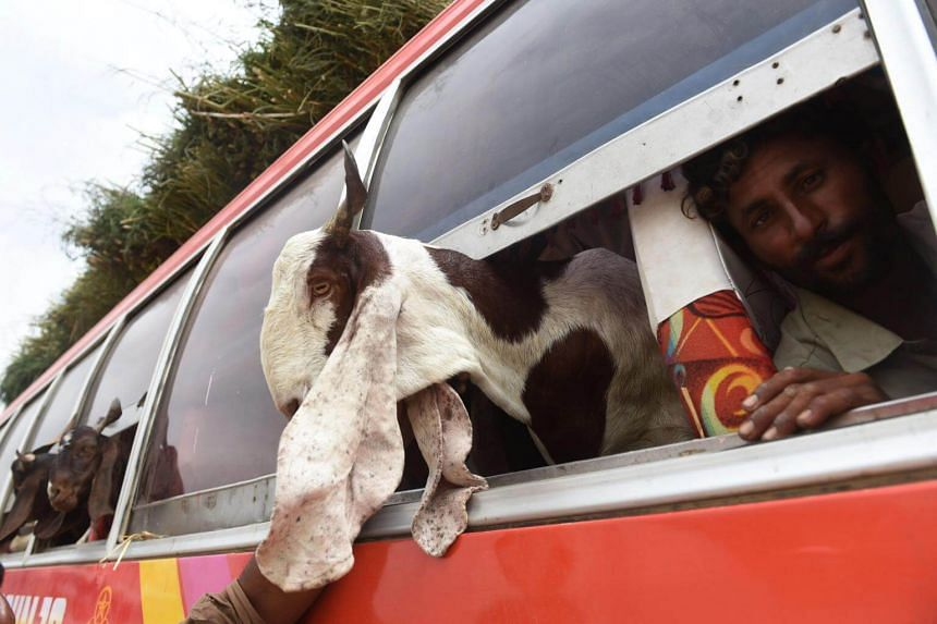 A Pakistani butcher transports goats in a bus as he arrives at an animal market ahead of the Muslim festival Eid al-Adha in Karachi on Aug 26, 2017.