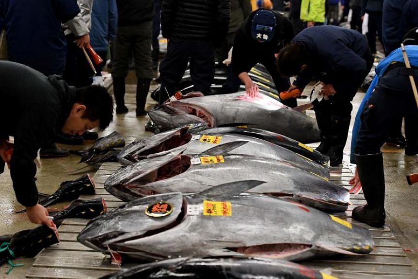 Fishmongers check bluefin tuna ahead of the new year auction at Tsukiji fish market in Tokyo on Jan 5, 2017.