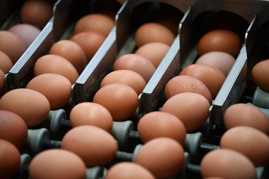 Eggs contaminated with the insecticide fipronil have been found in 40 countries, a German news agency reported on Sept 5, 2017.