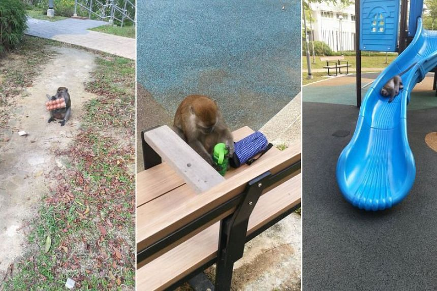 The monkey was spotted snatching a woman's eggs, frolicking at the playground and scratching a boy.
