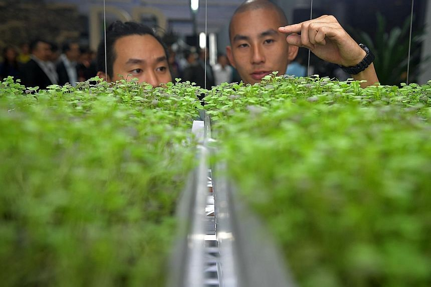"Microgreens farmers Timothy Jung (left), 28, and Christopher Leow, 29, looking at their close-group farming system at the ""Growing More with Less"" exhibition launched yesterday at The URA Centre in Maxwell Road."