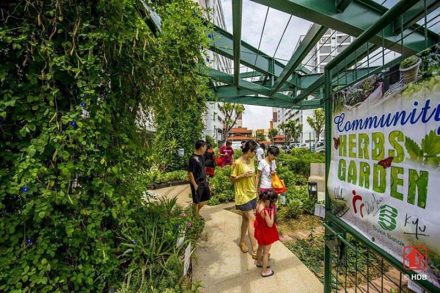The community herb garden in a neighbourhood centre in Bukit Batok Street 11.