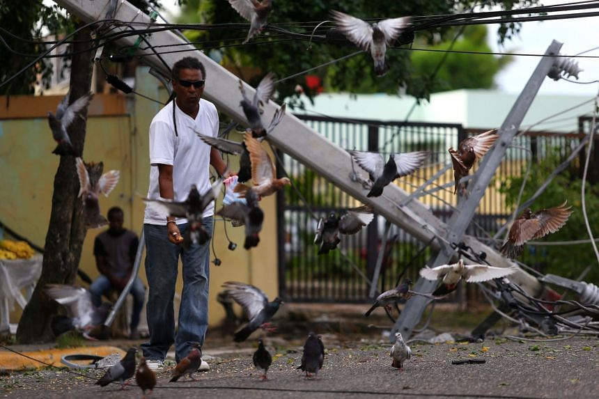 A man feeds pigeons next to a fallen power pole in Puerto Plata, Dominican Republic, Sept 8, 2017.