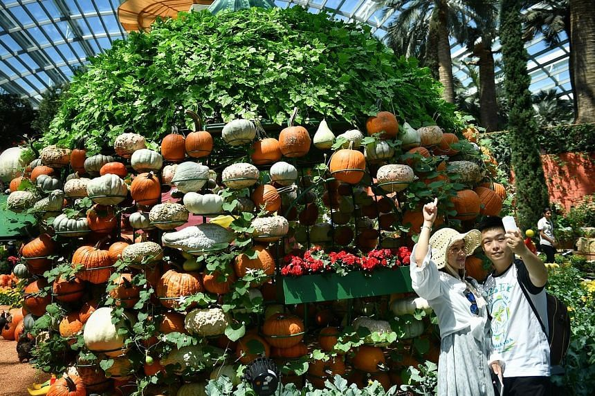 More than 2,000 pumpkins in various shapes, sizes and shades of orange are on display at Autumn Harvest at Gardens by the Bay.