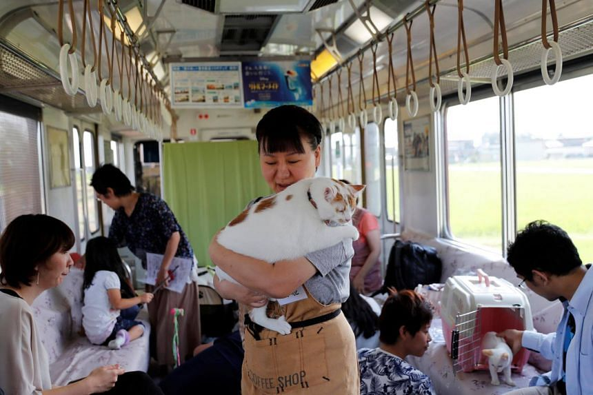 An organising staff member holds a cat in a train cat cafe, held on a local train to bring awareness to the culling of stray cats, in Ogaki, Gifu Prefecture, on Sept 10, 2017.