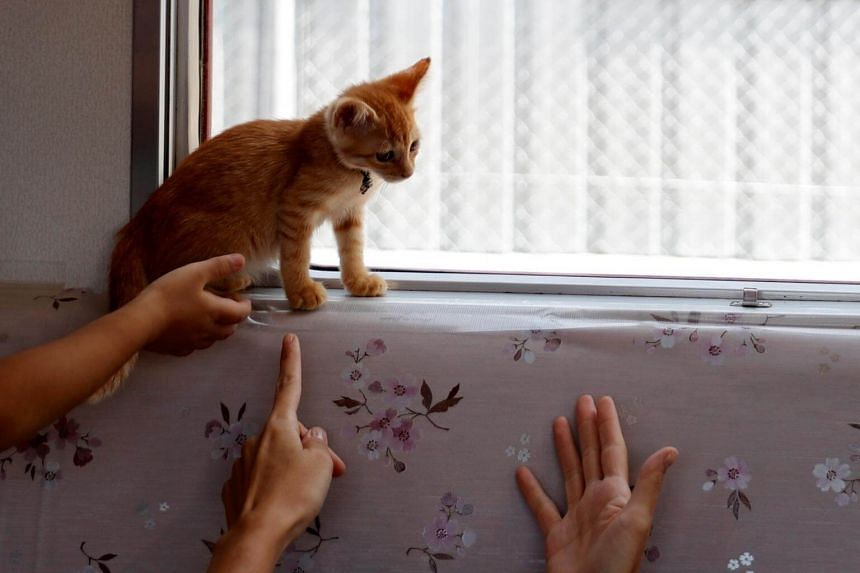 Passengers gesture, as a cat sits near a window, in a train cat cafe, held on a local train to bring awareness to the culling of stray cats, in Ogaki, Gifu Prefecture, on Sept 10, 2017.