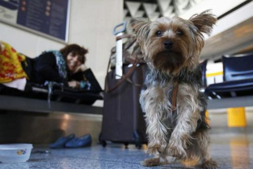Before deciding to travel with your pet, you should consider the animal's age, medical conditions and the potential stress on the animal.