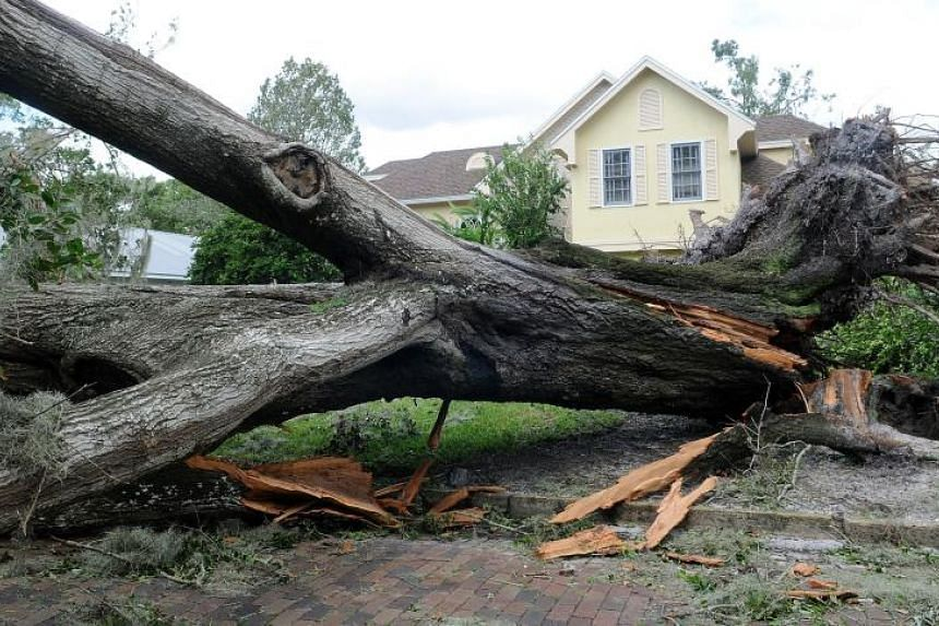 Hurricane Irma brought down massive trees throughtout Florida, including this one in Orlando.