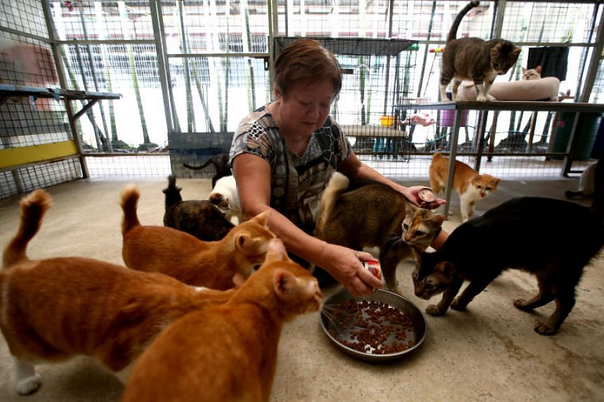 Madam Chaya Koi Kim, owner of Mdm Wong's Shelter, with some of the cats in her Pasir Ris Farmway 2 shelter on Oct 19, 2016.