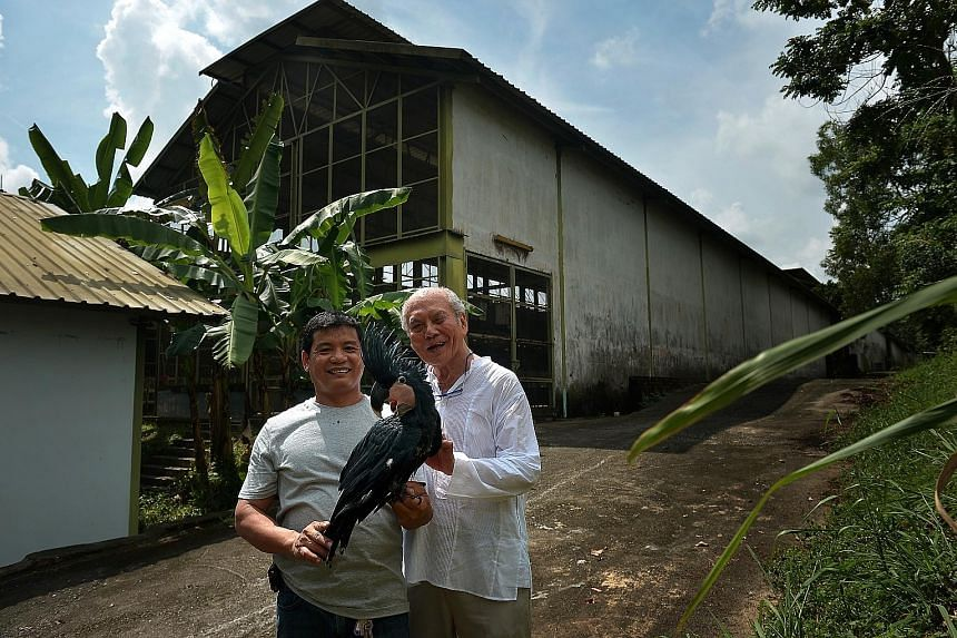 Mr Daniel Teo (at right), with curator Rosendo Jacildo, showing off a black palm cockatoo, one of the exotic bird breeds bred by Mandai Birds Sanctuary. The sanctuary now has just over 1,000 birds across about 70 species.