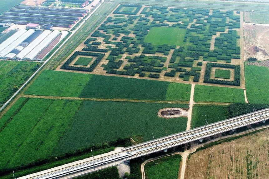A village in China's Hebei province has taken the country's obsession with QR (quick response) codes to new heights. Officials in Baoding city's Xilinshui village created a scannable code using about 130,000 Chinese juniper trees. It measures 227m al
