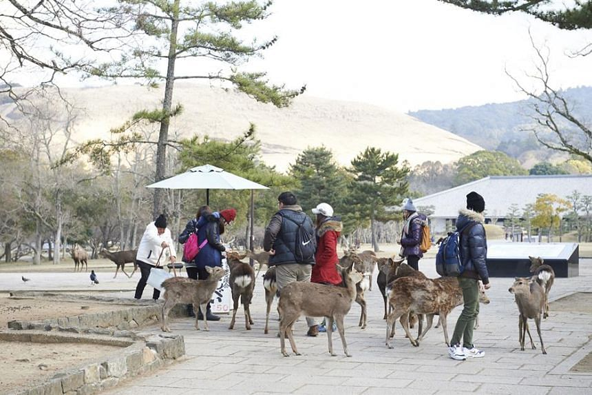 The Sika deer in Nara Park are unafraid of visitors and wait to be fed.