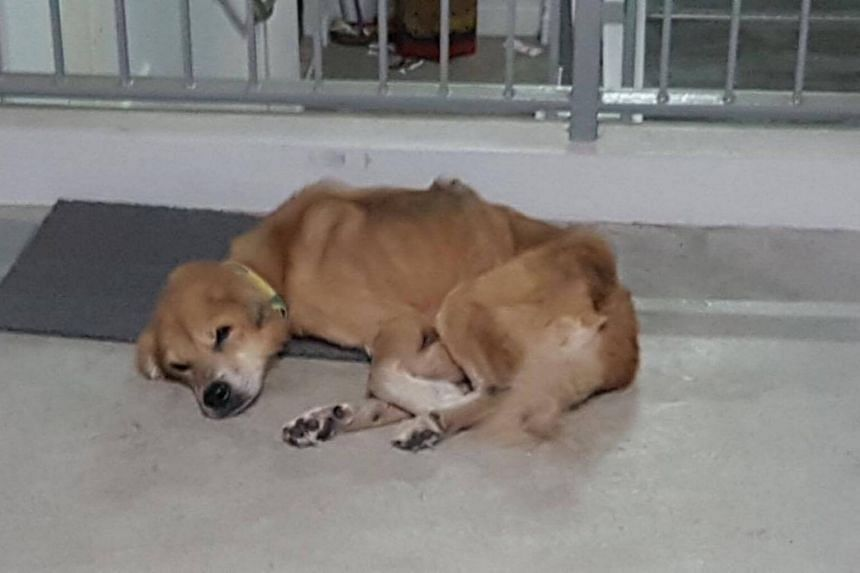 The scrawny dog, which had a collar around its neck, was seen with empty food and water bowls beside it.