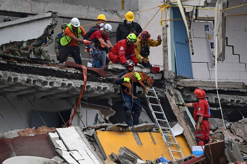 Rescuers lower a sniffer dog to help them search for survivors in a flattened building in Mexico City.